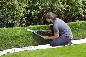 box-hedge-topiary-869073_1280